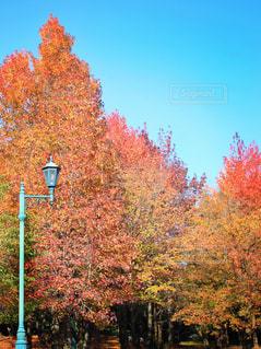 フォレスト内のツリーの写真・画像素材[867067]