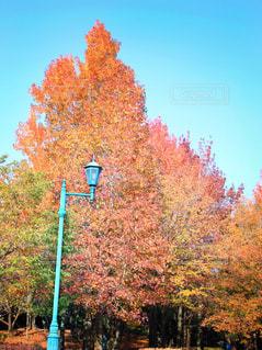 フォレスト内のツリーの写真・画像素材[867068]