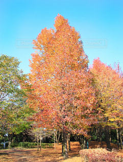フォレスト内のツリーの写真・画像素材[867069]