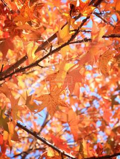 近くの木のアップの写真・画像素材[867070]