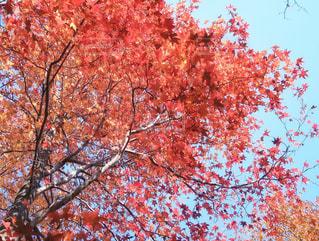近くの木のアップの写真・画像素材[867071]