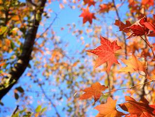 木の赤い花の写真・画像素材[867073]