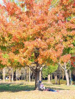 木の隣に立っている人のグループの写真・画像素材[867085]