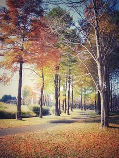 公園の木の写真・画像素材[867086]