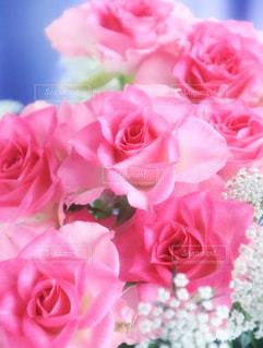 近くの花のアップの写真・画像素材[979072]