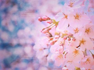 近くの花のアップの写真・画像素材[993613]