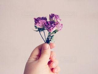 花を持っている手の写真・画像素材[1022577]