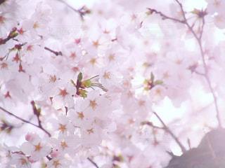 近くの花のアップの写真・画像素材[1089126]