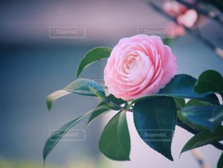 花の花束の写真・画像素材[1090124]