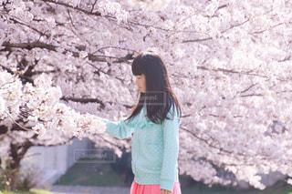 桜と女の子の写真・画像素材[1115887]