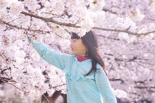 桜と女の子の写真・画像素材[1118029]