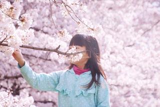 桜と女の子の写真・画像素材[1118030]