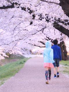 桜と過ごした日の写真・画像素材[1126674]