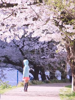桜と過ごした日の写真・画像素材[1126675]
