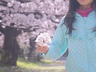 桜と過ごした日の写真・画像素材[1126679]
