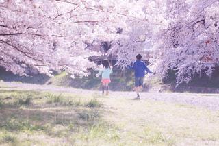 桜と過ごした日の写真・画像素材[1126681]