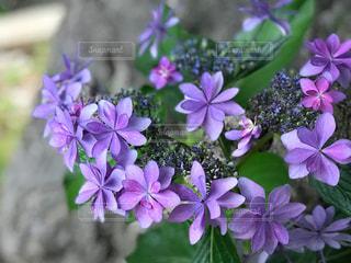 近くに紫の花のアップの写真・画像素材[1227826]