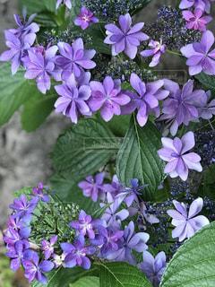 近くに紫の花のアップ - No.1227831