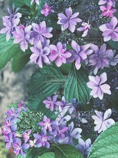 近くの花のアップの写真・画像素材[1227833]