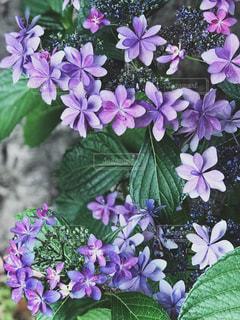 近くの植物に紫の花のアップの写真・画像素材[1227834]