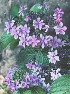 近くの植物に紫の花のアップの写真・画像素材[1227837]
