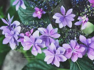 近くに紫の花のアップの写真・画像素材[1227840]