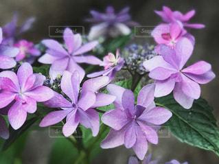 近くに紫の花のアップ - No.1227842