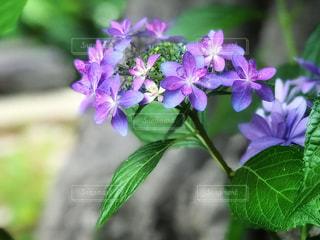 近くの花のアップの写真・画像素材[1227844]