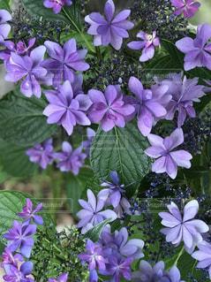 近くに紫の花のアップの写真・画像素材[1227846]