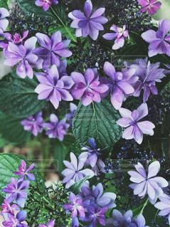 近くに紫の花のアップの写真・画像素材[1227847]