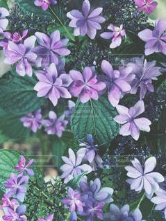 近くの花のアップの写真・画像素材[1227848]