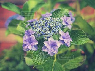 近くの花のアップの写真・画像素材[1227853]
