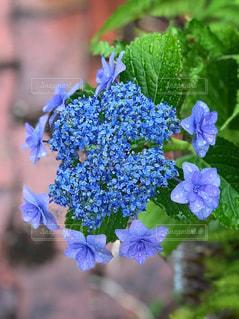 近くの花のアップの写真・画像素材[1227854]