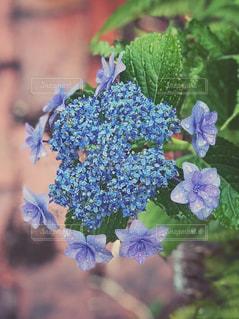 近くの花のアップの写真・画像素材[1227855]