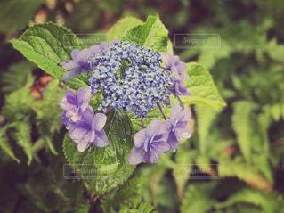 近くの花のアップの写真・画像素材[1227857]