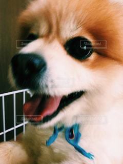 犬の写真・画像素材[303420]