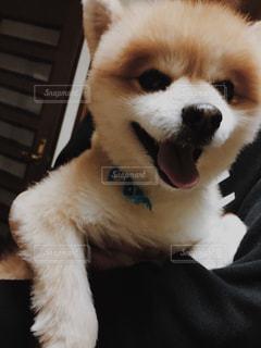 犬の写真・画像素材[303421]