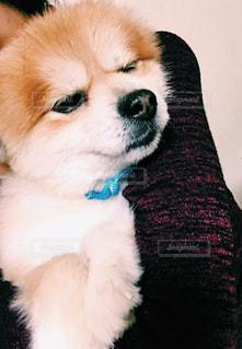 犬の写真・画像素材[303423]