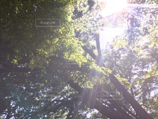 自然の写真・画像素材[303539]