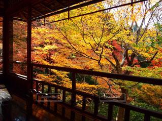 秋の写真・画像素材[1133535]