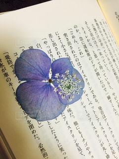 押し花の写真・画像素材[1133637]