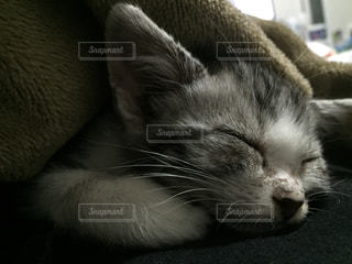寝顔の写真・画像素材[323245]