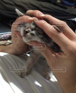 猫の写真・画像素材[346417]
