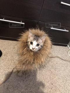 猫の写真・画像素材[385501]