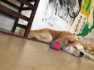 犬の写真・画像素材[650323]