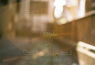 自然の写真・画像素材[2134]