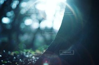 自然の写真・画像素材[2127]