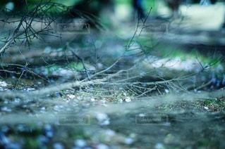自然の写真・画像素材[2120]
