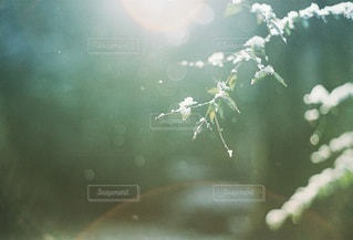 自然の写真・画像素材[2116]
