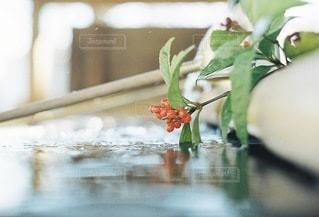 自然の写真・画像素材[2104]